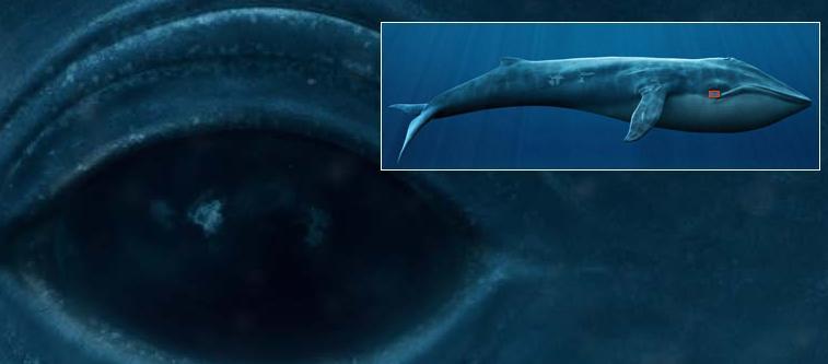 Whale Flash